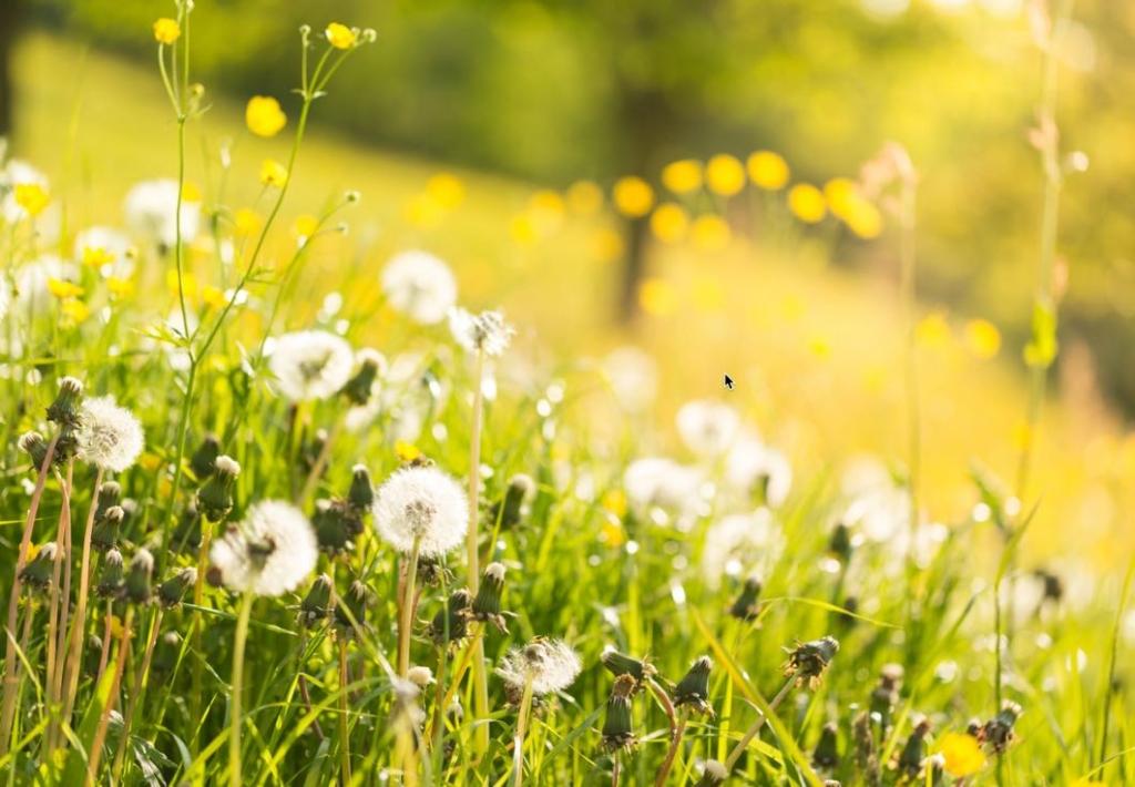 Geschenk-Ideen für Kinder für den Frühling